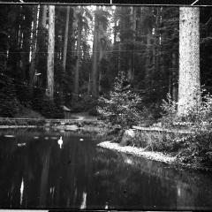 sequoia park duck pond.jpg