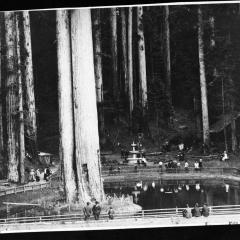 sequoia park people.jpg
