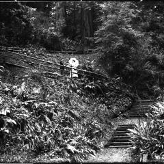 sequoia park trail.jpg