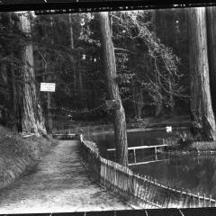 sequoia park walkway.jpg
