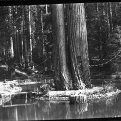 sequoia park pond.jpg