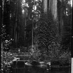 sequoia park duck pond island.jpg
