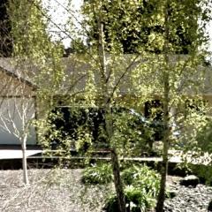 2004 Huntoon Lane.jpg